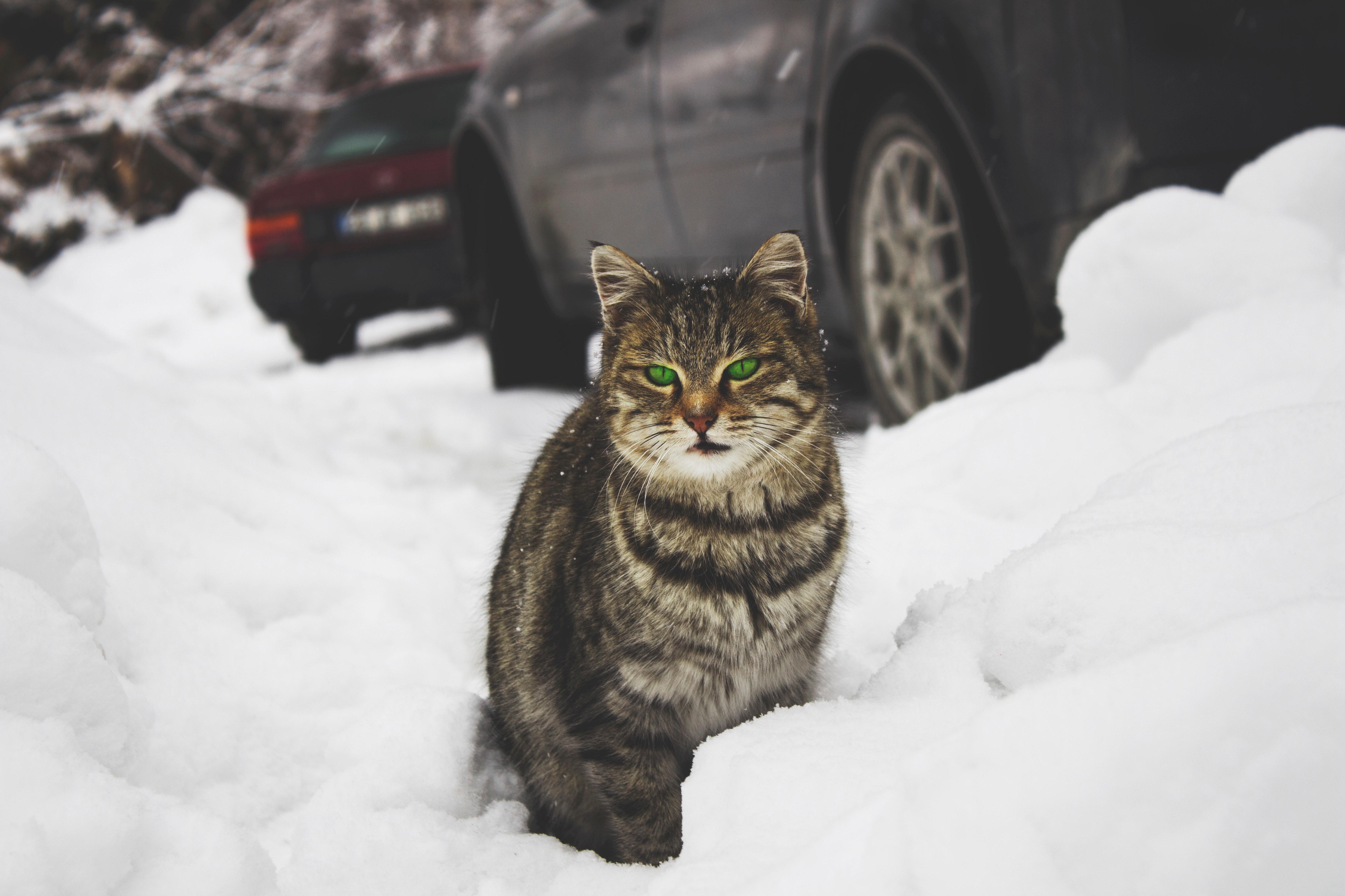 Kış Aylarında Sokak Hayvanları İçin Neler Yapılabilir?