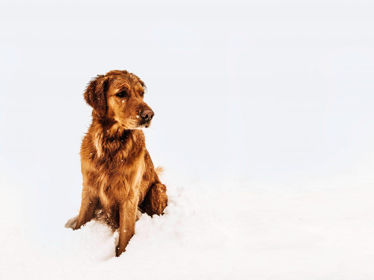 Kış Aylarında Sokak Hayvanları İçin Neler Yapılabilir? Hepsi ve daha fazlası