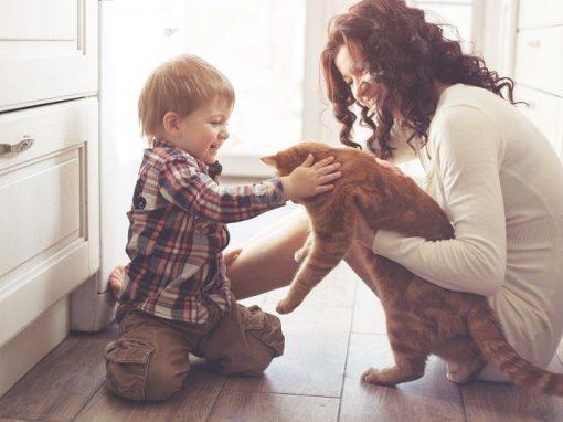 Kedi-Sahiplendirme